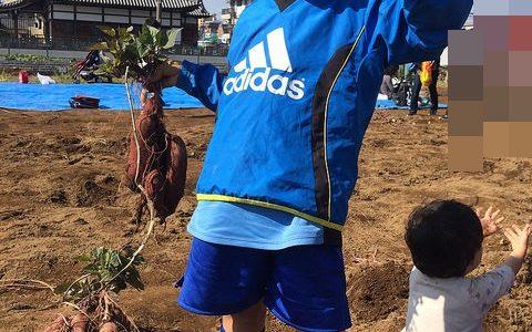 今年も江戸ちゃんファーム東葛西で芋掘りをしてきたよ 子供と楽しく土いじり