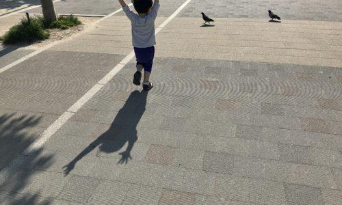 子供は何故鳩を追いかけるのか?